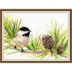 Little Bird S976