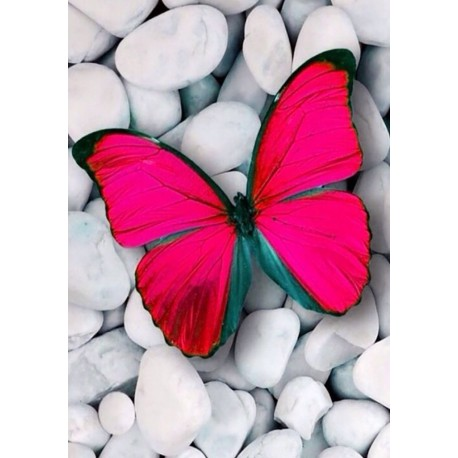 Deimantinis paveikslas Pink Butterfly WD054 20*30 cm