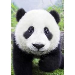 Deimantinis paveikslas Curious Panda WD074 20*30 cm