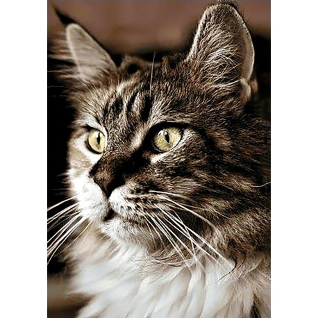Diamond painting kit Cat at Home WD212