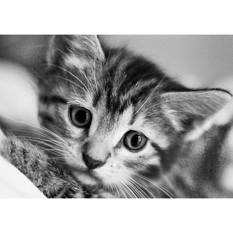 Deimantinis paveikslas Black and White Cat WD213 30*20 cm