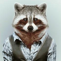 Deimantinis paveikslas Mr Raccoon WD257 38*38 cm