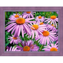 Deimantinis paveikslas Purple Chamomiles AZ-1702 40x30cm