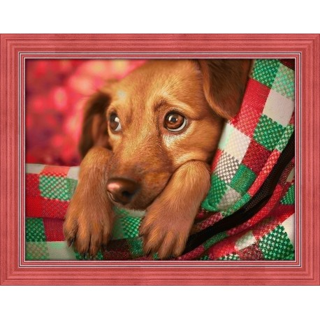 Deimantinis paveikslas Dachshund Puppy AZ-1703 40x30cm