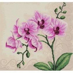 Orchid SB2227