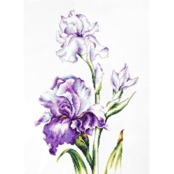 Irises SB2251