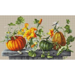 Pumpkin SB2303