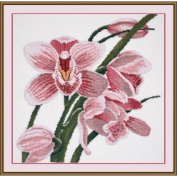Orchid S762