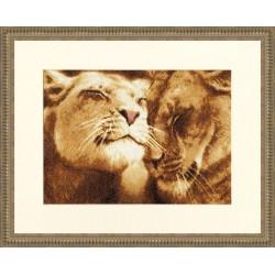 Lions in Love S/DZH028