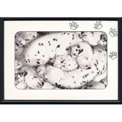 101 Dalmatian S/NL018