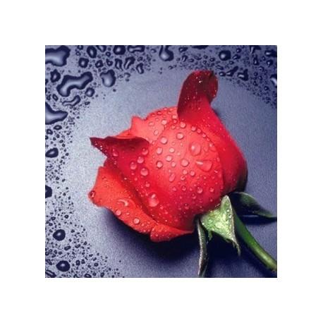 Diamond painting Red Rose AZ-14 Size: 22х24